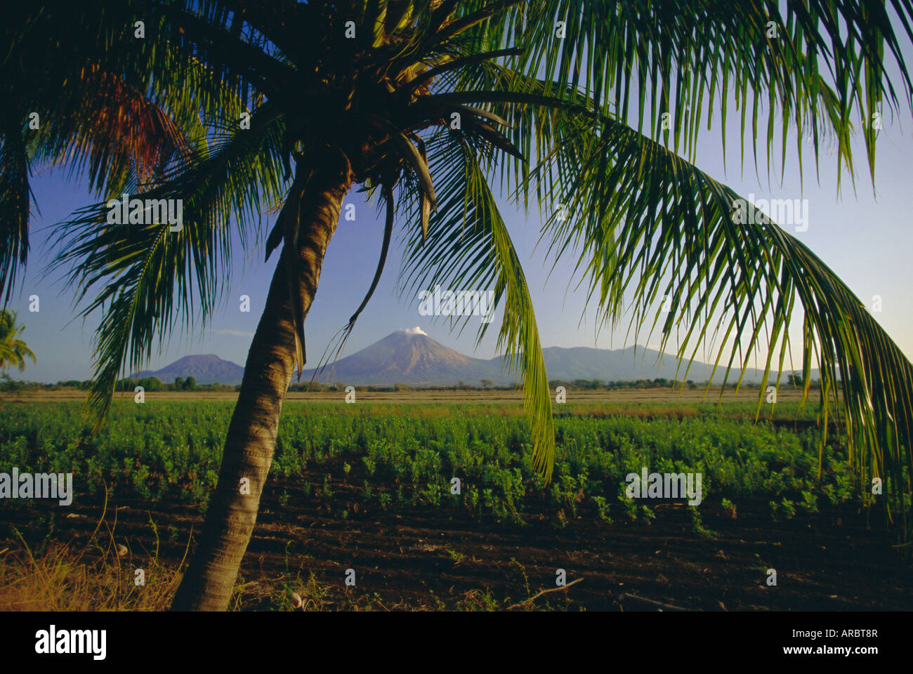 Fields at Chichigalpa to Volcan San Cristobal at the northwest end of Nicaragua's chain of volcanoes, Nicaragua - Stock Image