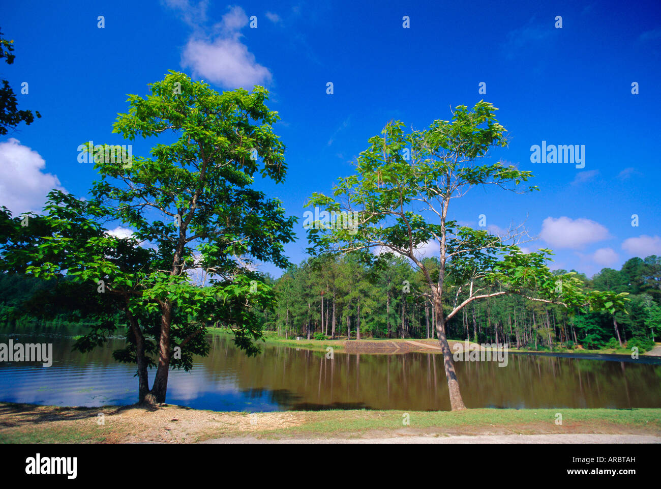 The Little River at Claude D Kelly State Park in Monroe County, southern Alabama, USA - Stock Image