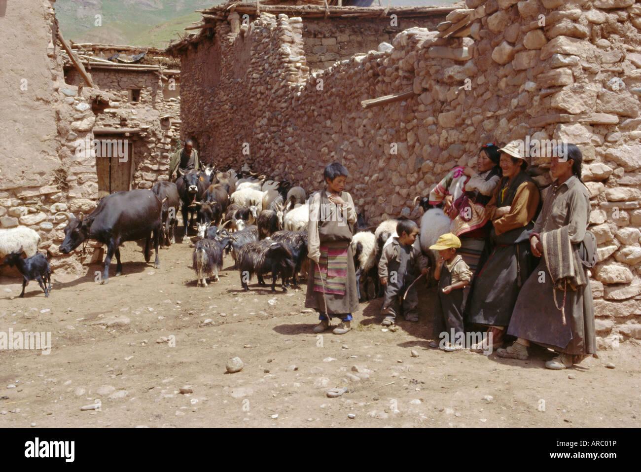Village scene with Tibetans and their animals, Lahuto, Tibet, China, Asia - Stock Image