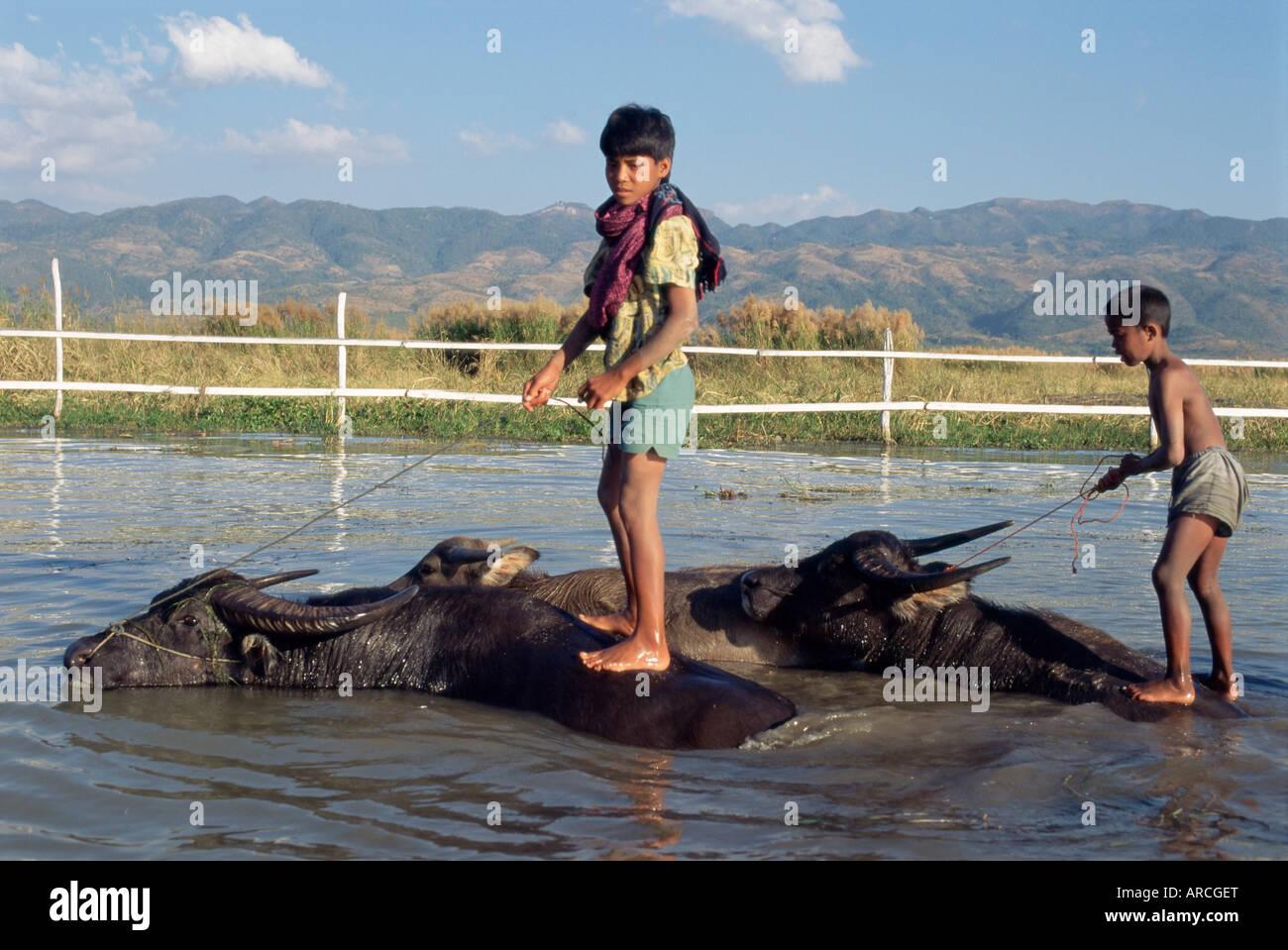 Children riding water buffaloes, Inle Lake, Shan State, Myanmar (Burma), Asia - Stock Image