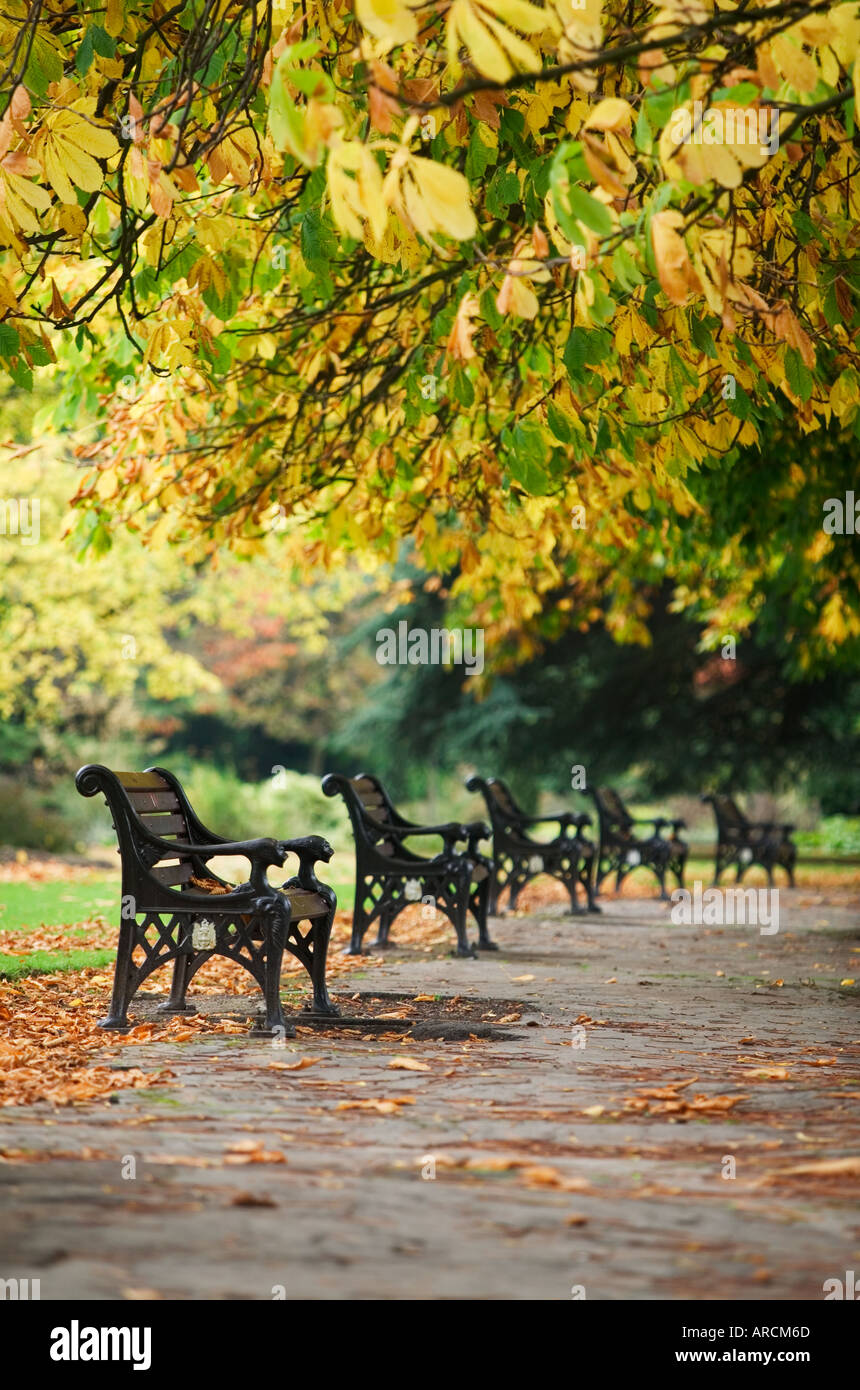 Wrought iron seats underneath chestnut trees in Autumn in Cannon Hill Park in Birmingham UK - Stock Image