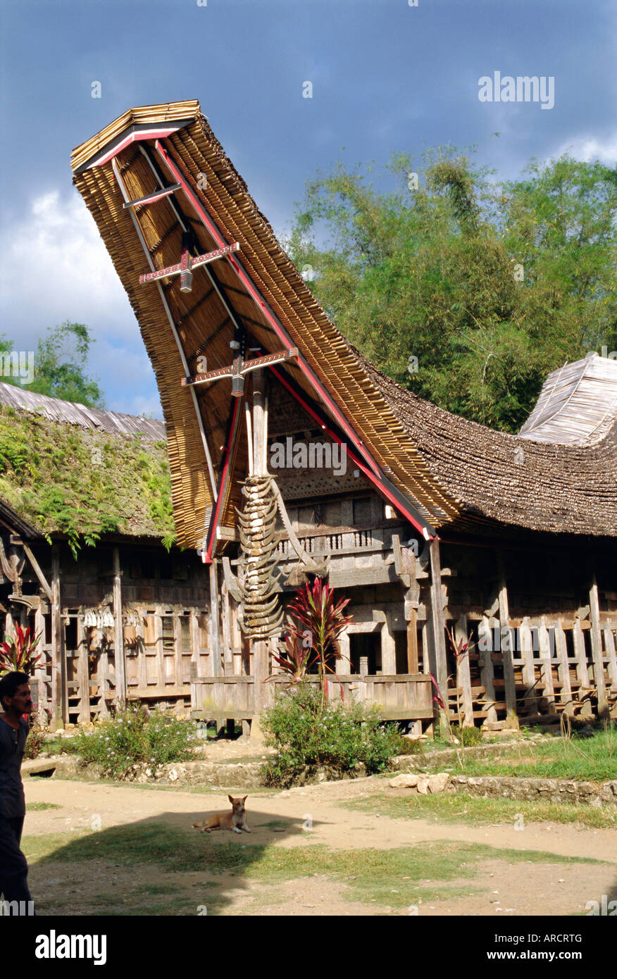 Typical house and granary, Toraja area, Sulawesi, Indonesia - Stock Image