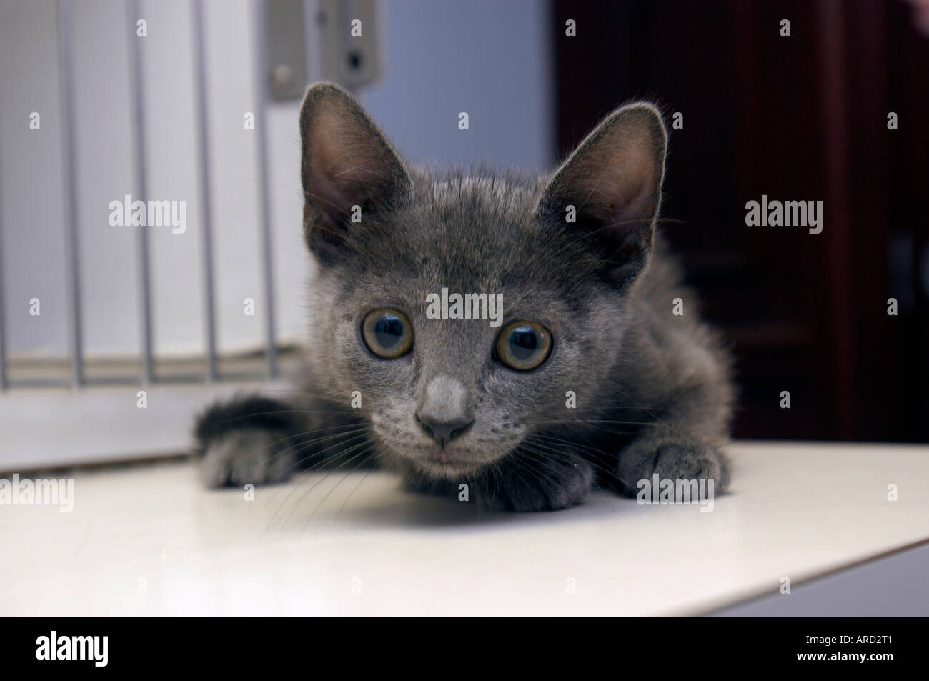 City Critters cat rescue organization rescued cats up for