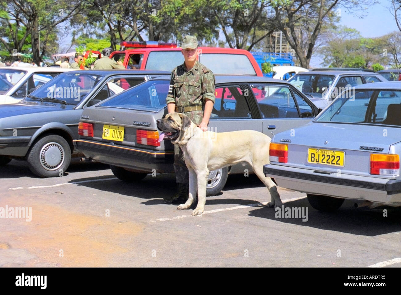 Brazilian Army Soldier and Brazilian Fila Mastiff Stock Photo