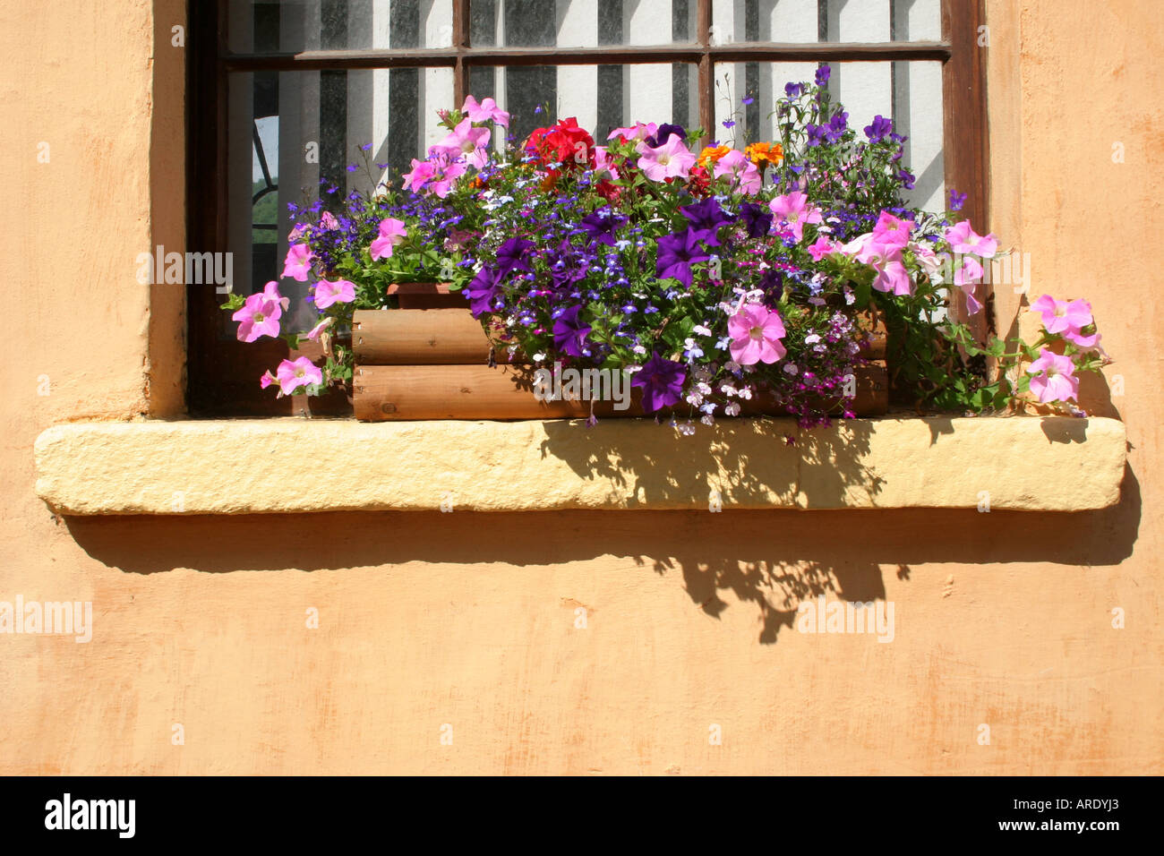 colourful plants in window pot in the pretty village of Avoca, County Wicklow, Republic of Ireland - Stock Image