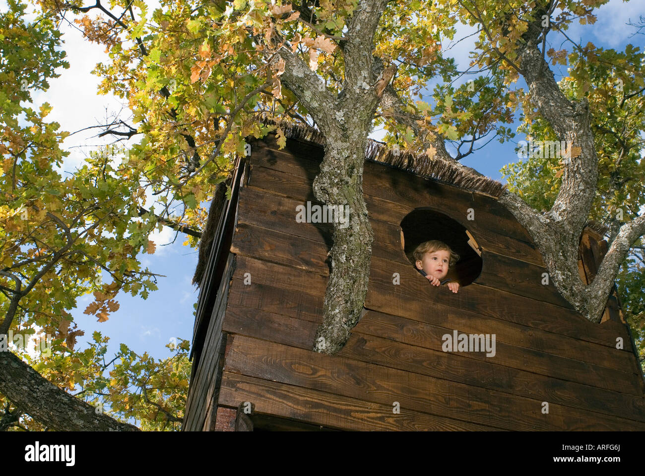 2-3 years old boy in a tree house - Stock Image