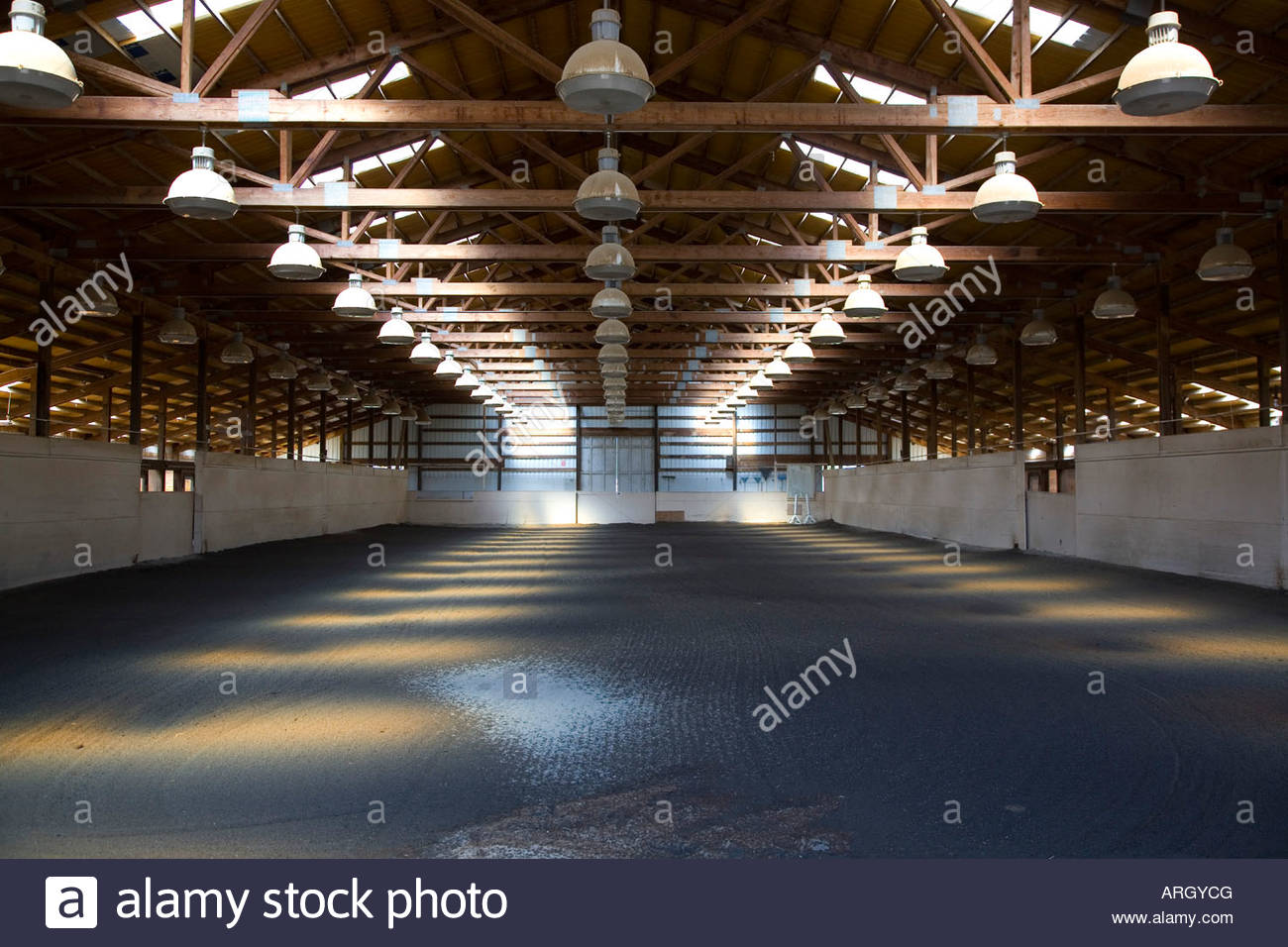 electric lights in an indoor horse riding arena stock photo