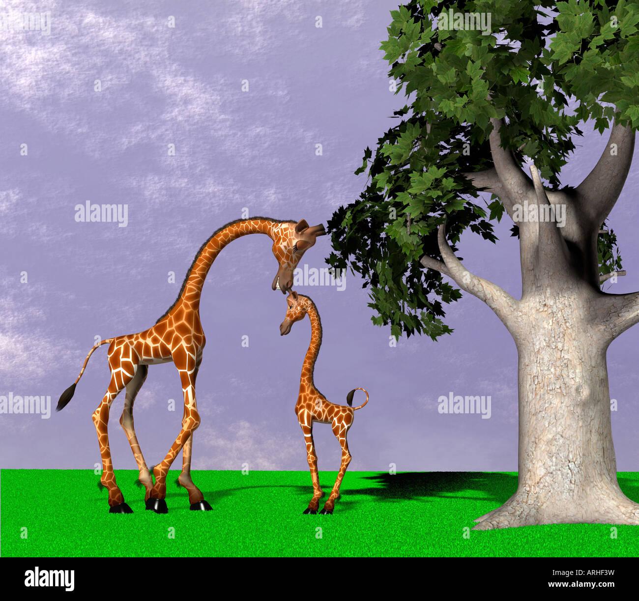 giraffes - Stock Image