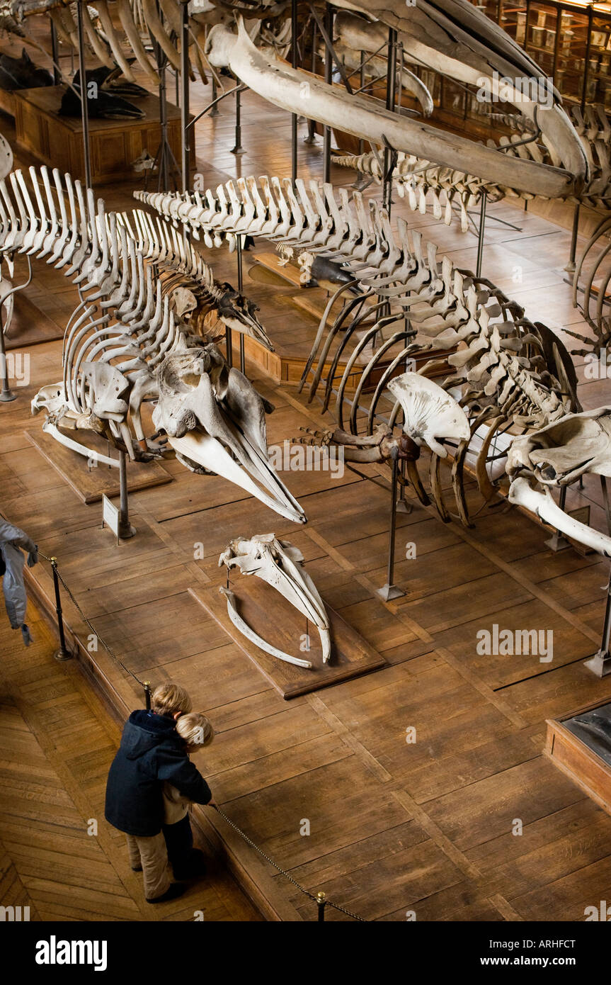 Children looking at an exhibition of bones and skeletons in a museum. - Stock Image