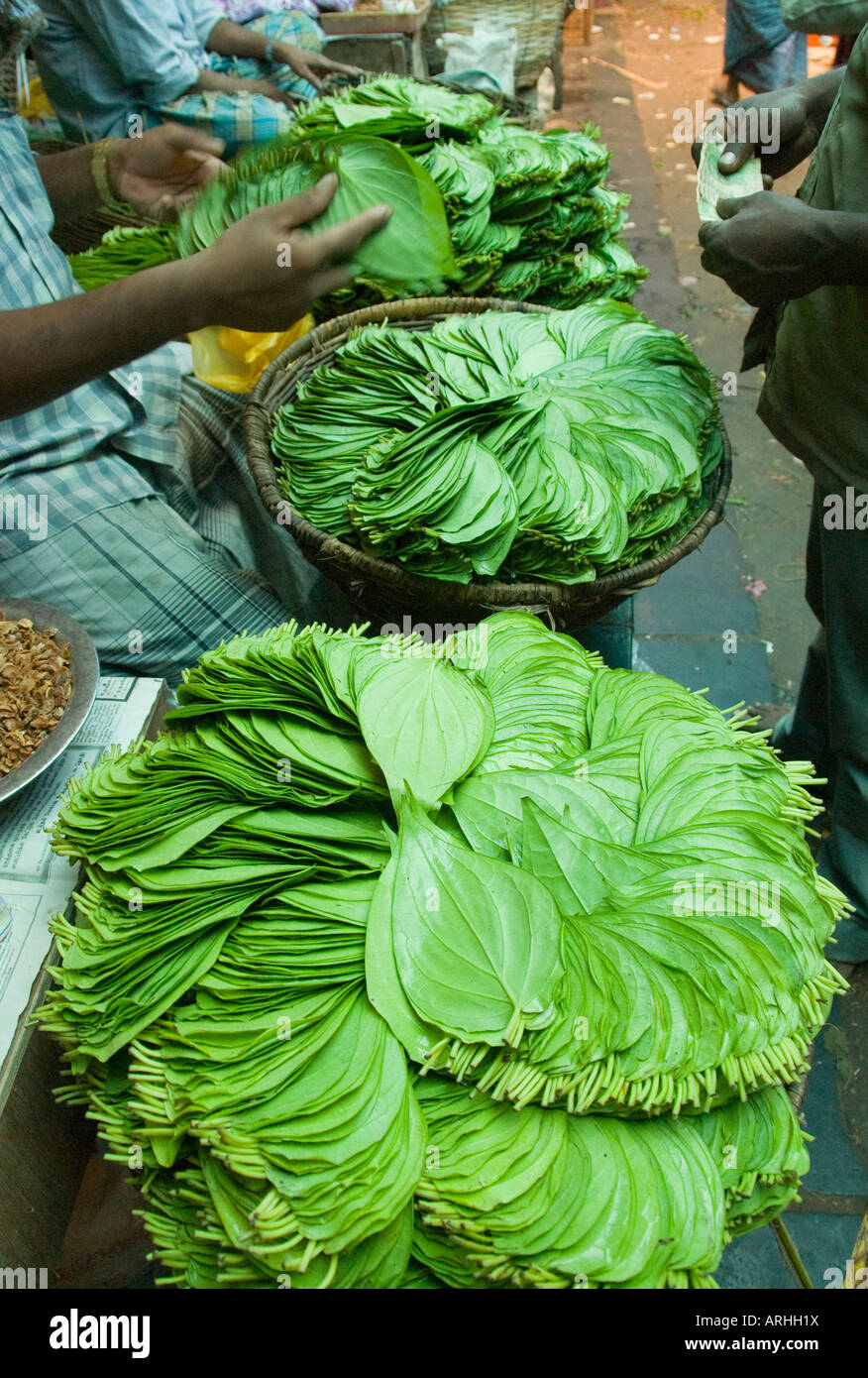 Betel leaves for sale in India - Stock Image