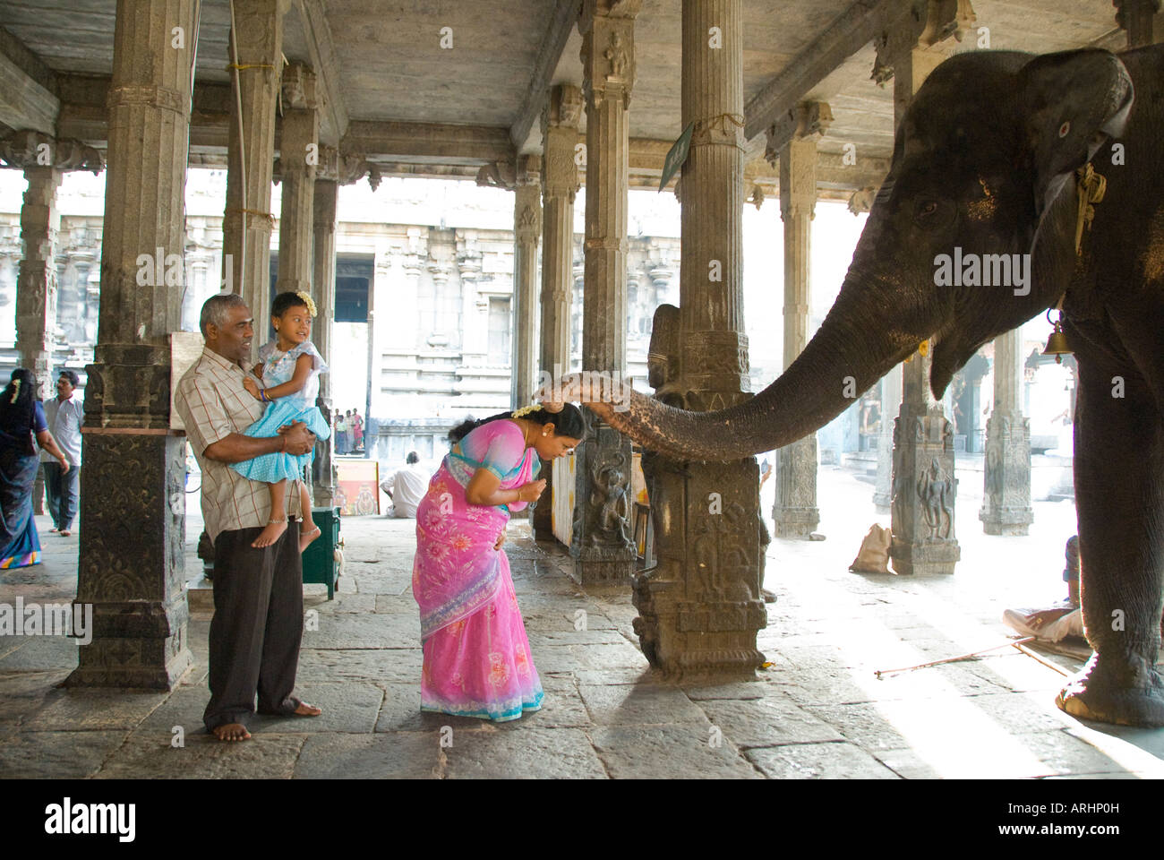 The Temple elephant gives a blessing at the Arunachaleswarer Temple Tiruvannamalai in Tamil Nadu India - Stock Image