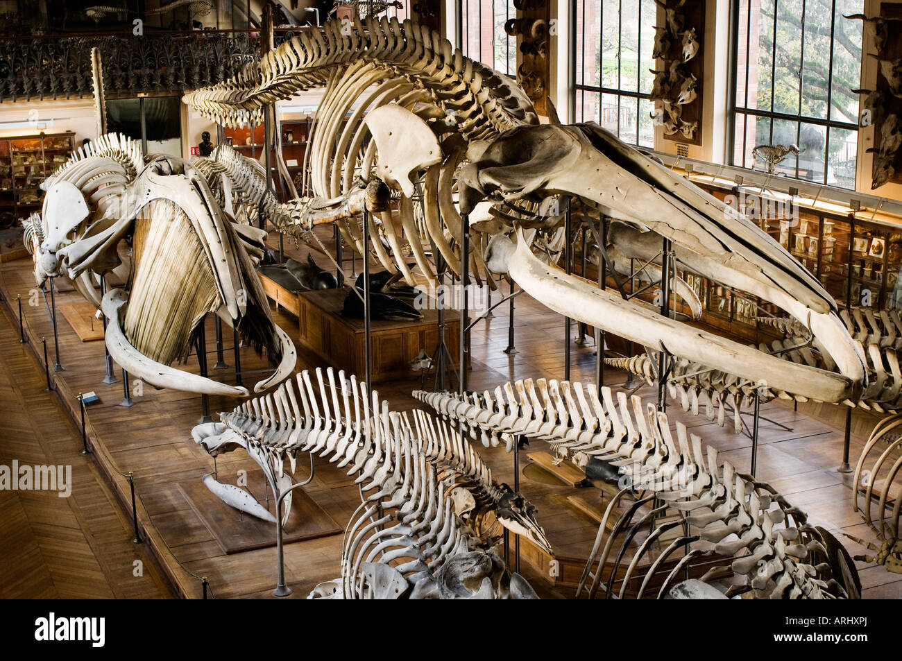 An exhibition of bones and skeletons in the Paleontology and Stock ...