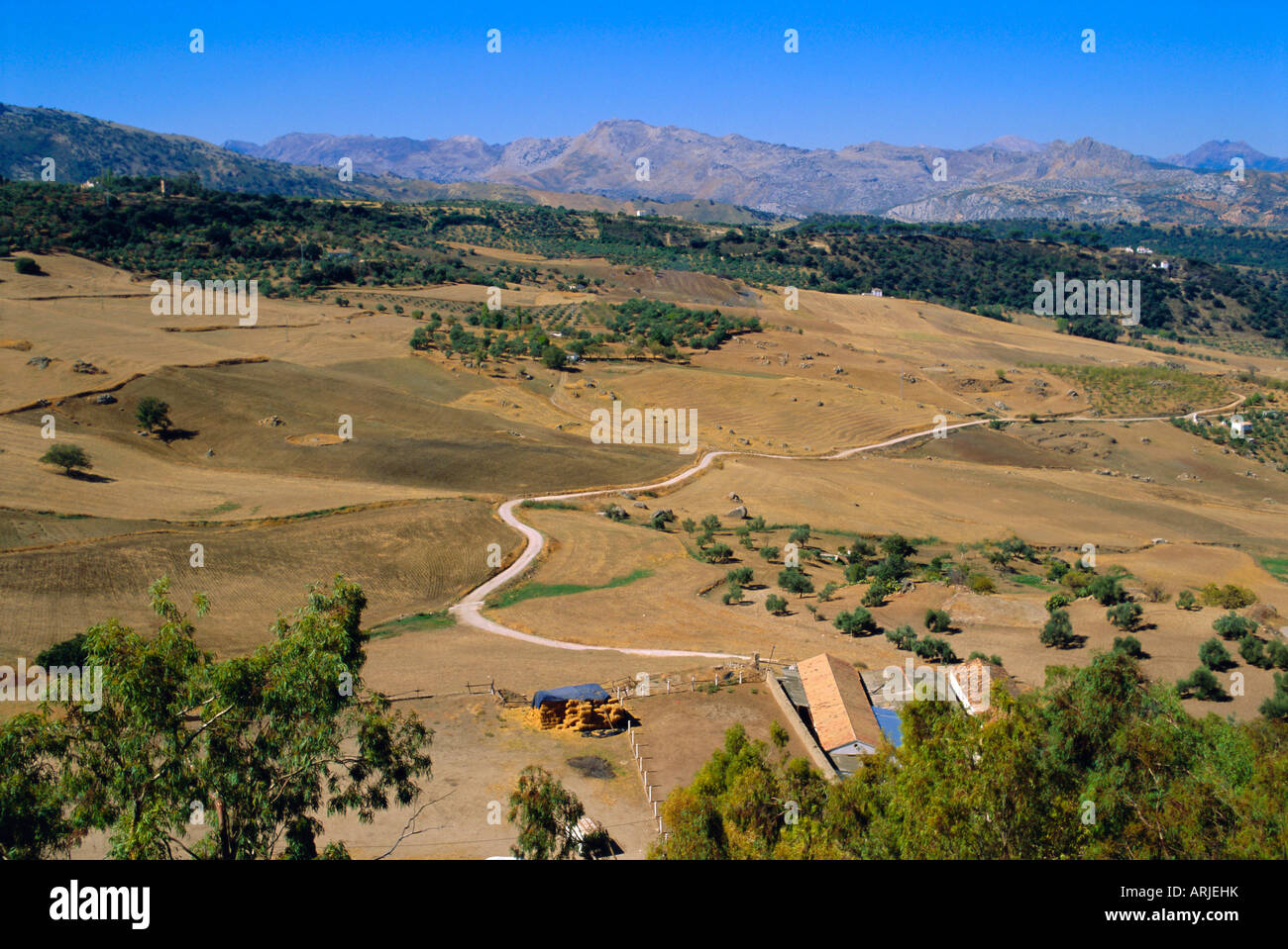 The Serrania de Ronda, Ronda, Andalucia, Spain, Europe - Stock Image