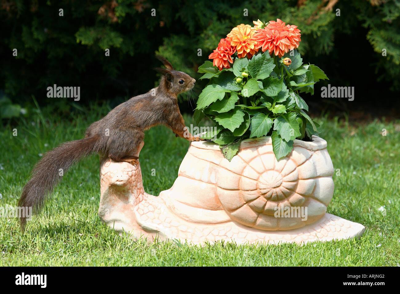 European squirrel - standing on clay figure Sciurus vulgaris Stock Photo