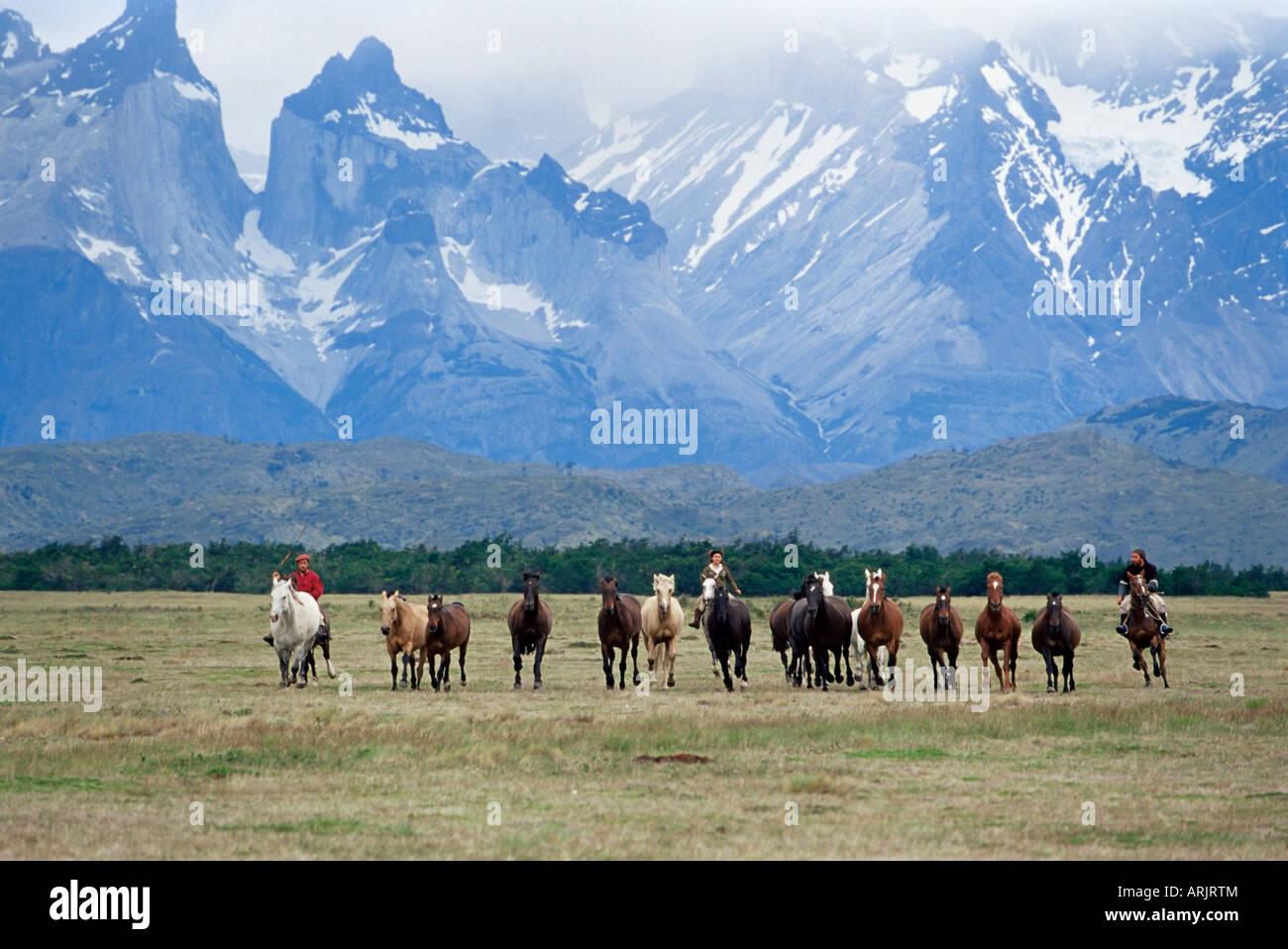 A group of gauchos riding horses, with the Cuernos del Paine mountains behind, Torres del Paine National Park, Patagonia, - Stock Image