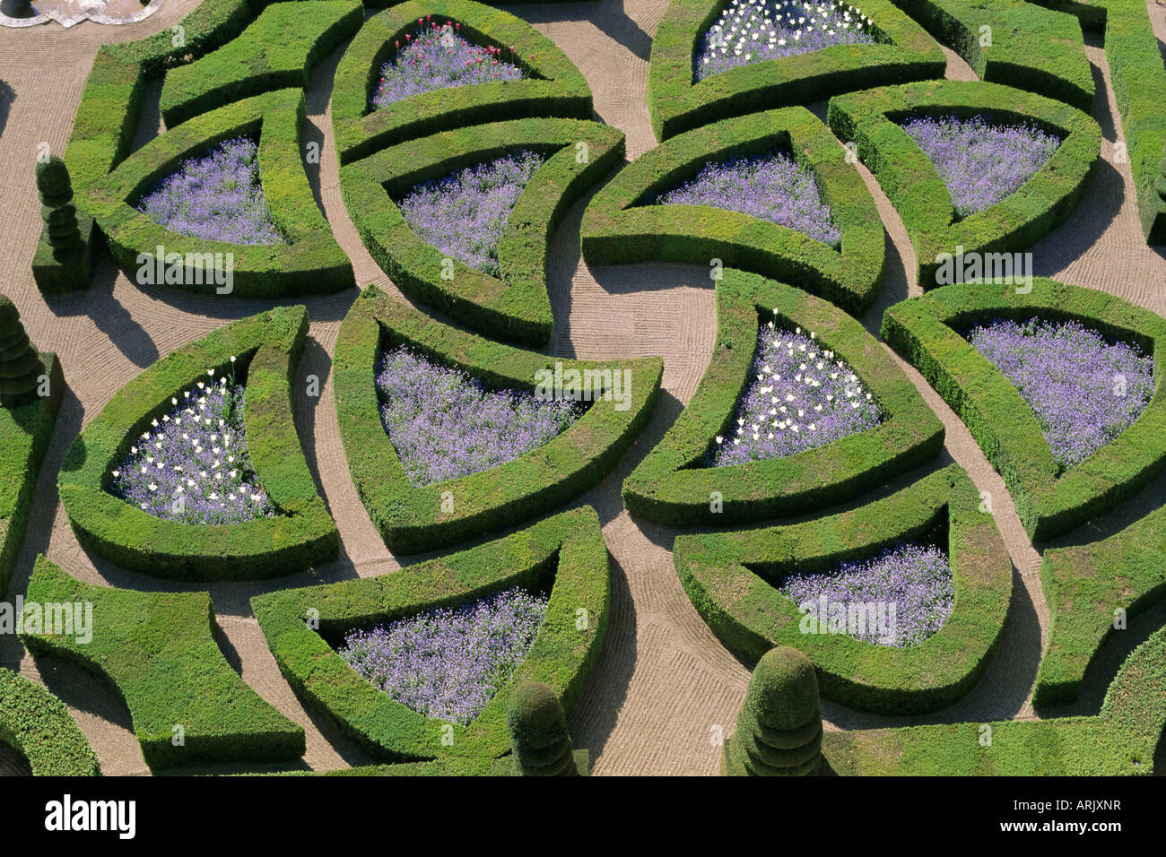 Formal gardens, Chateau of Villandry, Indre et Loire, Loire Valley, France, Europe - Stock Image