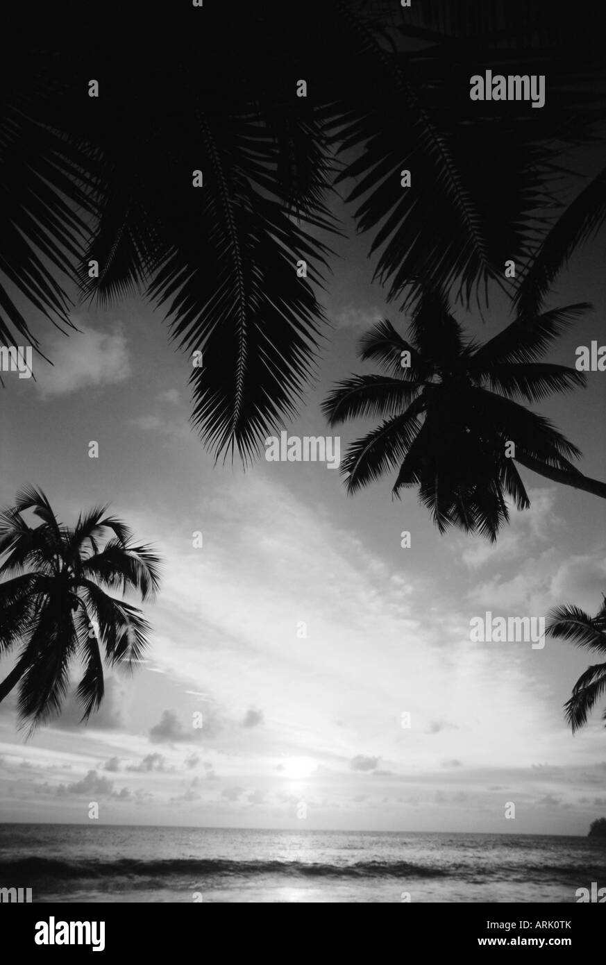 Silhouette of palm trees, Seychelles - Stock Image