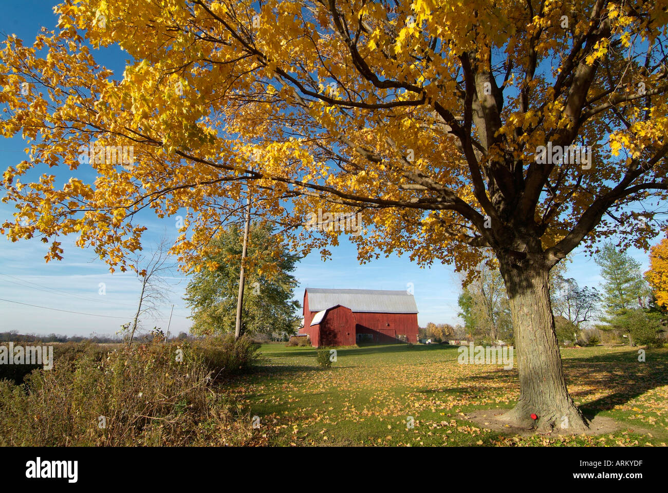 Autumn fall colors with a colorful maple tree with yellow leaves ...
