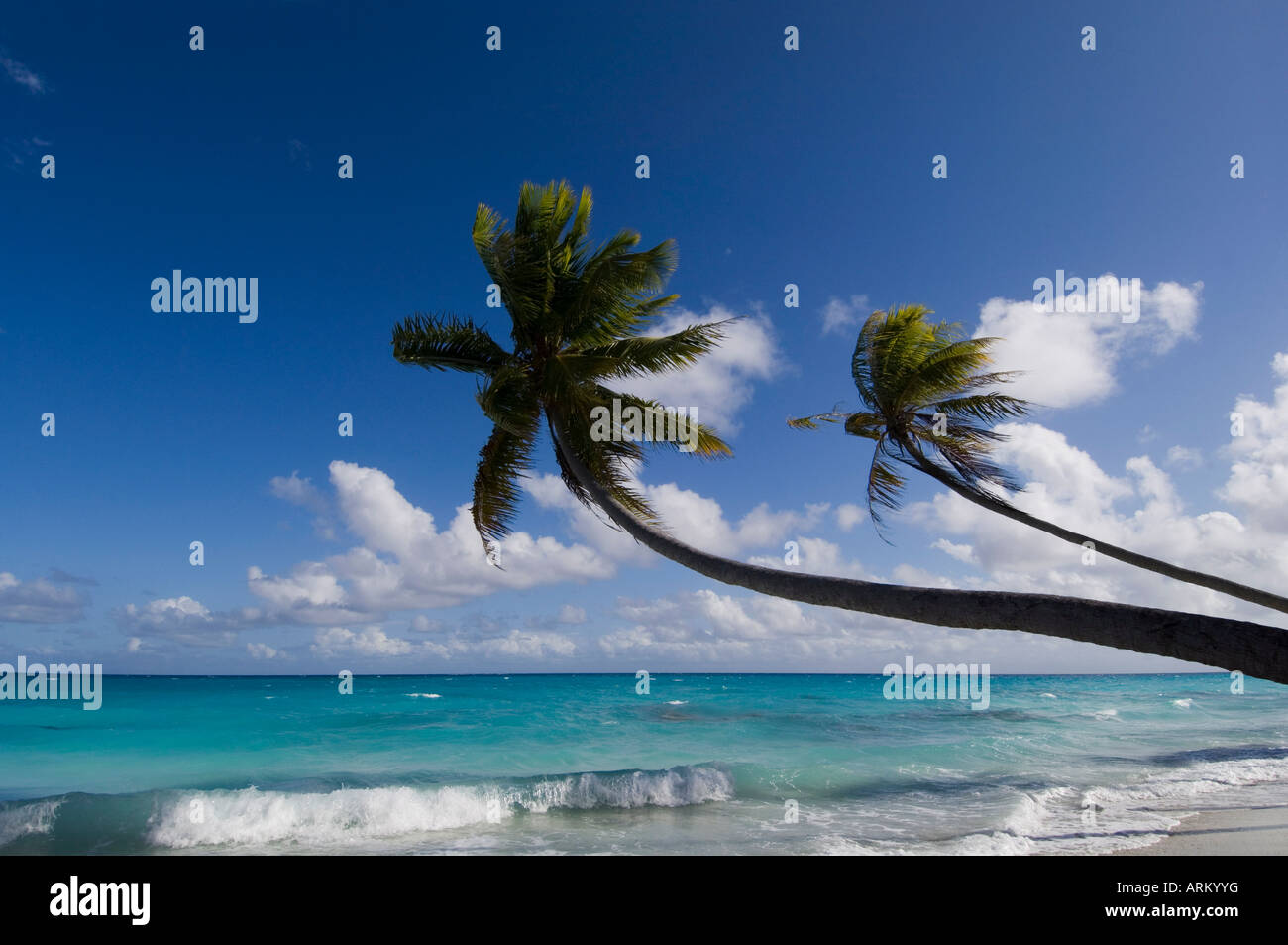 Fakarawa, Tuamotu Archipelago, French Polynesia, Pacific Islands, Pacific - Stock Image