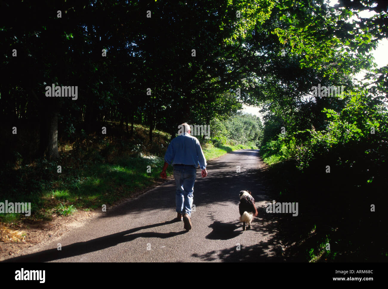 Man and collie dog walking in summer down an English country lane Suffolk England - Stock Image