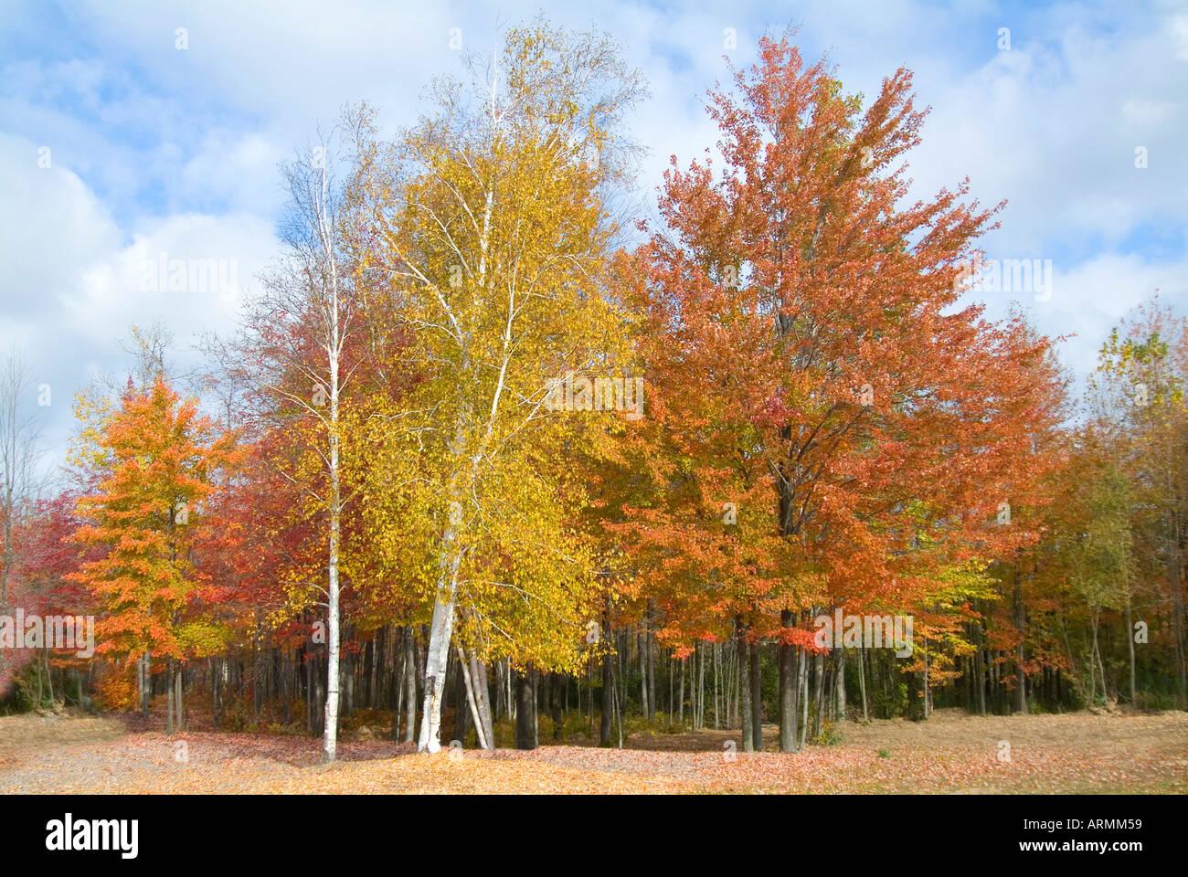 Autumn fall colors in southeastern Michigan near port huron Michigan - Stock Image
