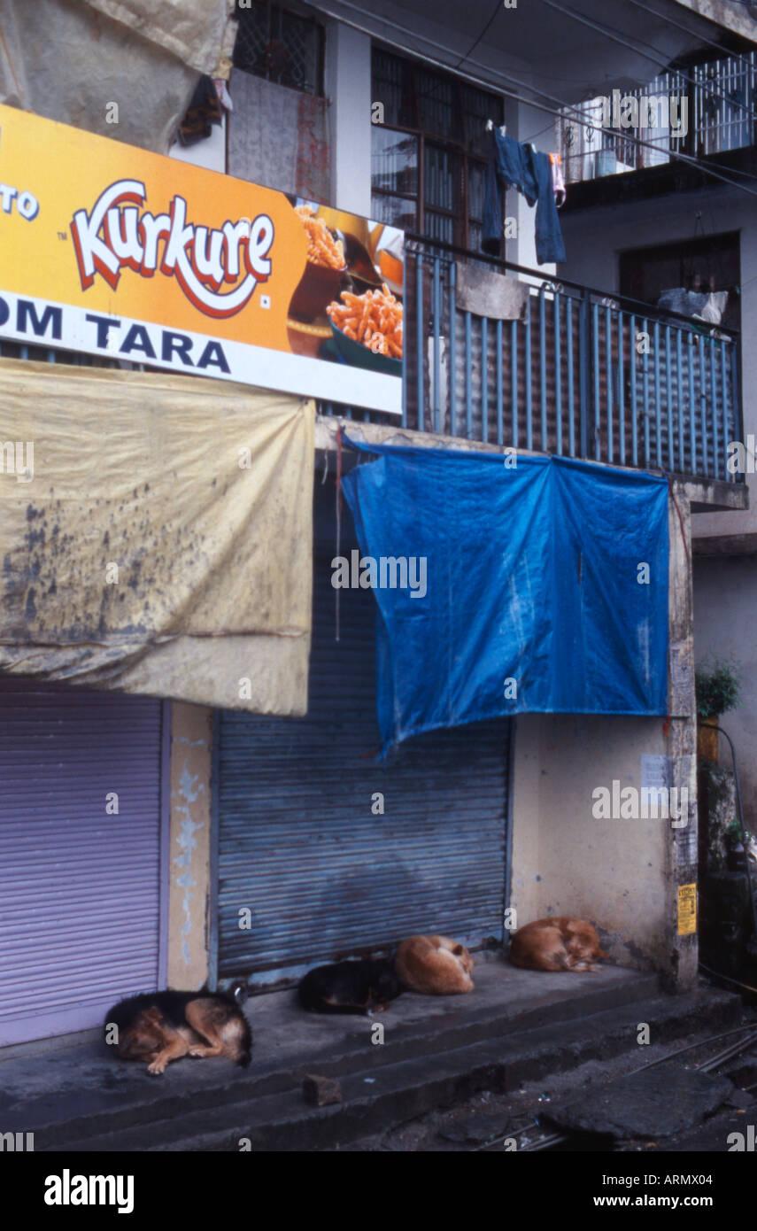 Sleeping Dogs Mcleod Gange India Stock Photo Alamy