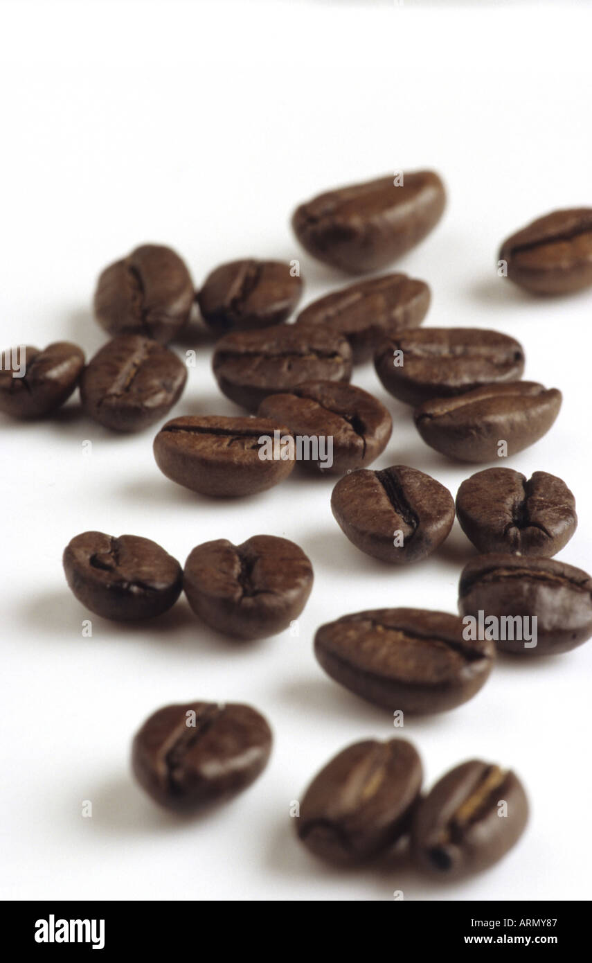 coffee (Coffea arabica), coffeebean, Juli 05. - Stock Image