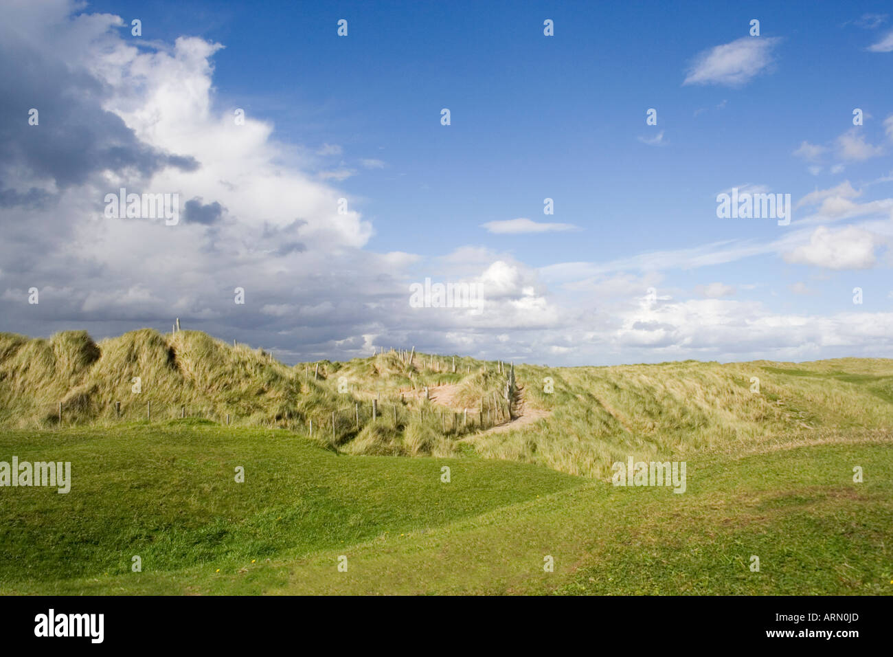 West coast of Ireland. Fanore. County Clare. Sand dunes. Long grass waving in the breeze. - Stock Image