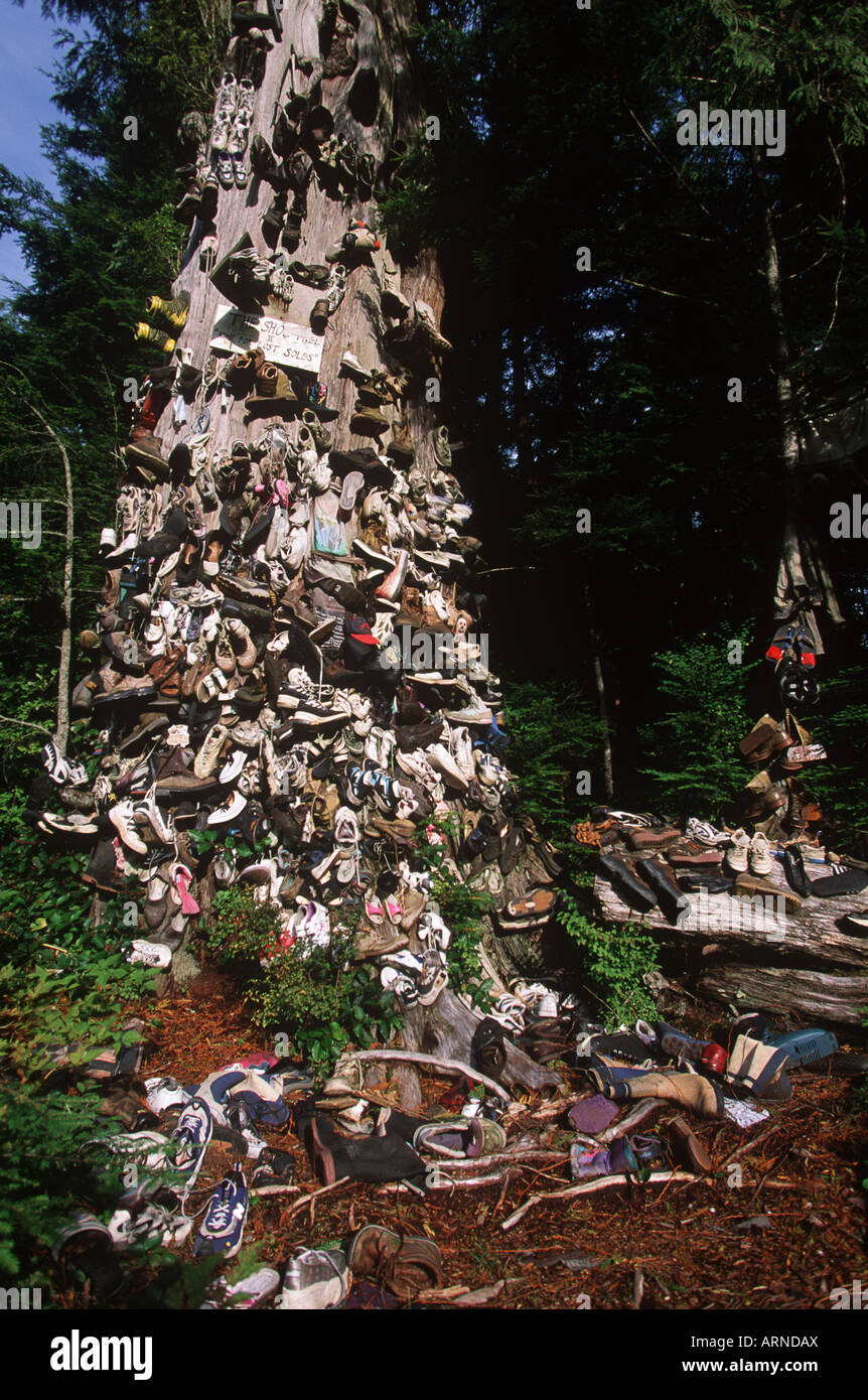 Christmas Shoe Tree.Prince Rupert Shoe Tree British Columbia Canada Stock