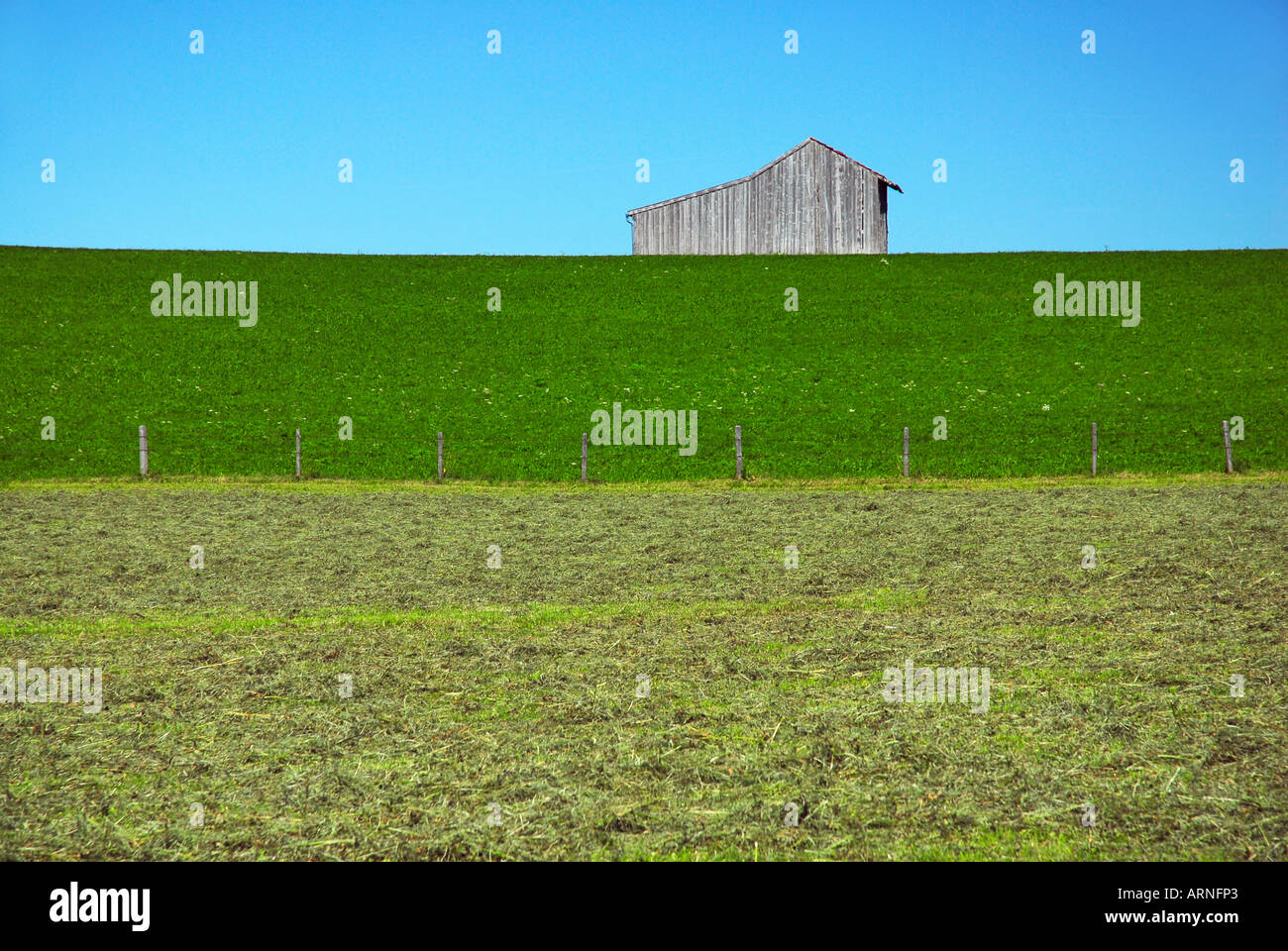 Fresh mowed hayfield with barrn - Stock Image