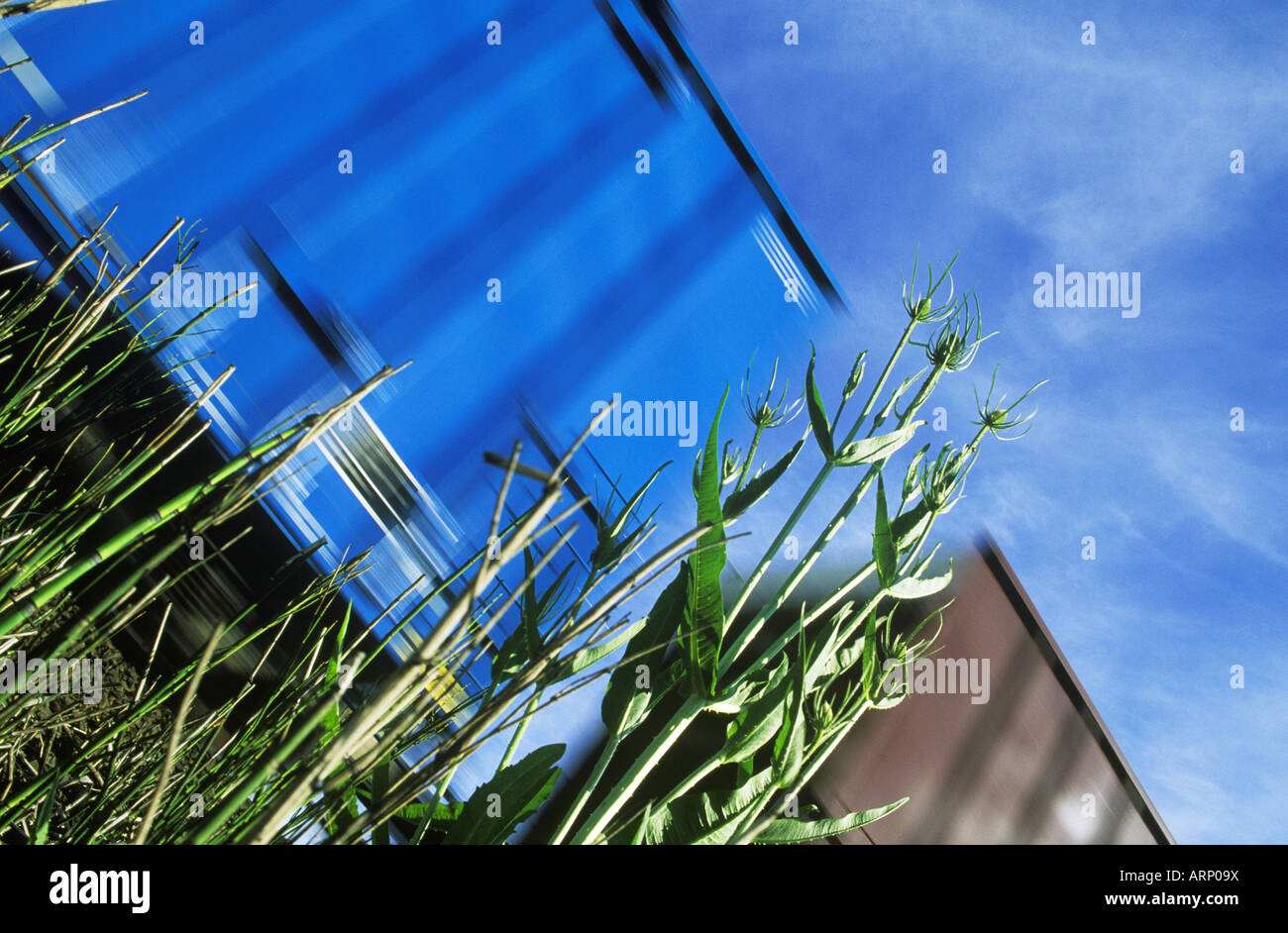 Freight train with motion blur from low angle in grasses - Stock Image