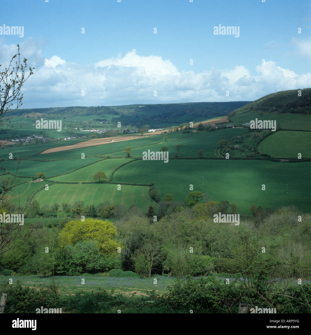 Devon valley farmland with crops fields and woodland in spring near Sidmouth - Stock Image