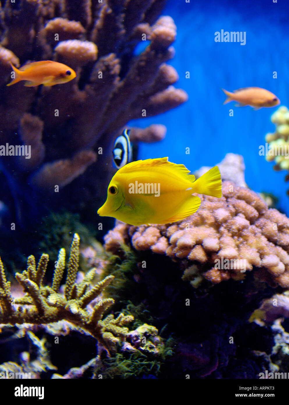 Tropical Fish Displayed at the Birch Aquarium Visitors