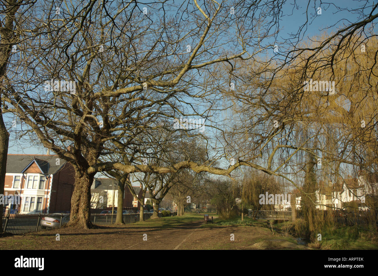 Winter trees at Roath Mill Gardens, Cardiff Stock Photo: 16108458 ...