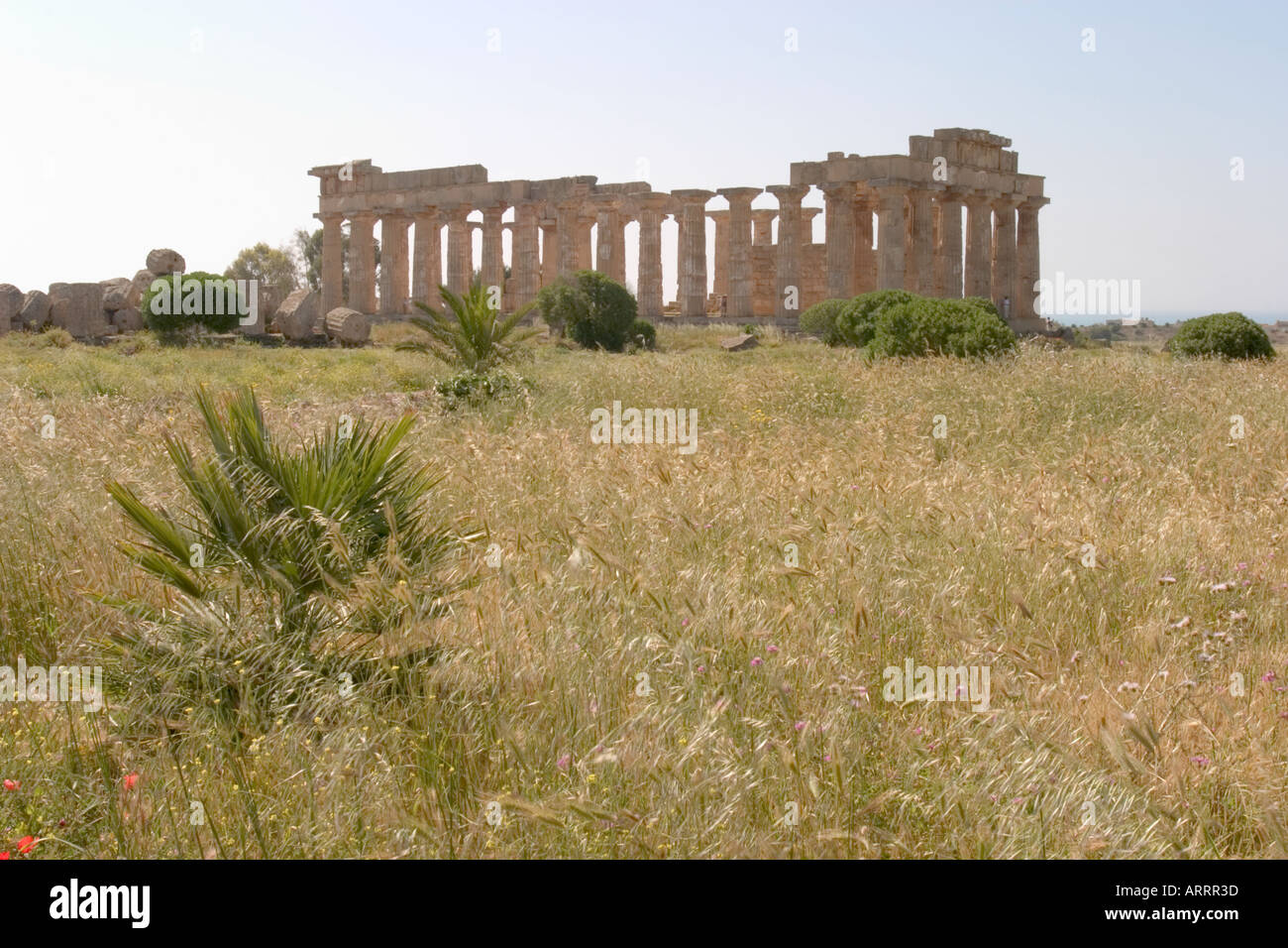Selinunte Western Sicily - Stock Image