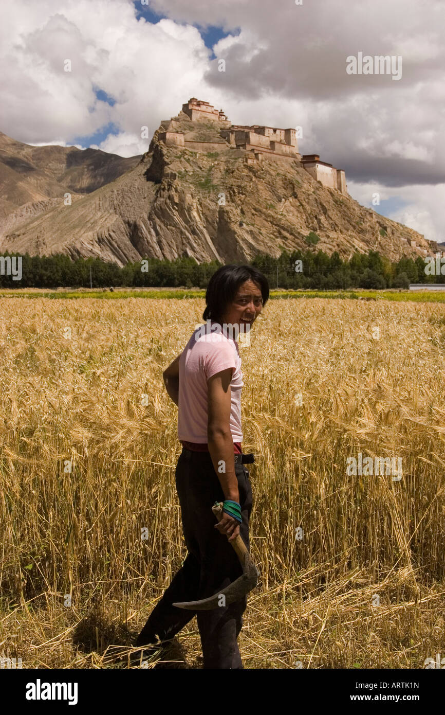Harvest in front of the fort at Gyantse, Tibet - Stock Image
