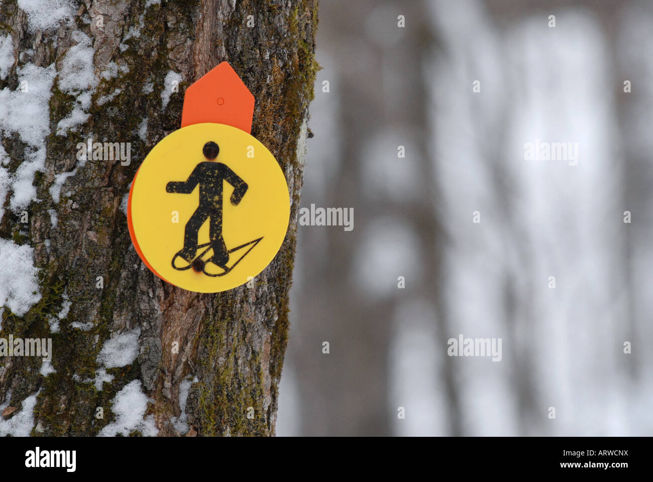 Snowshoeing trail Laurentians Quebec canada - Stock Image