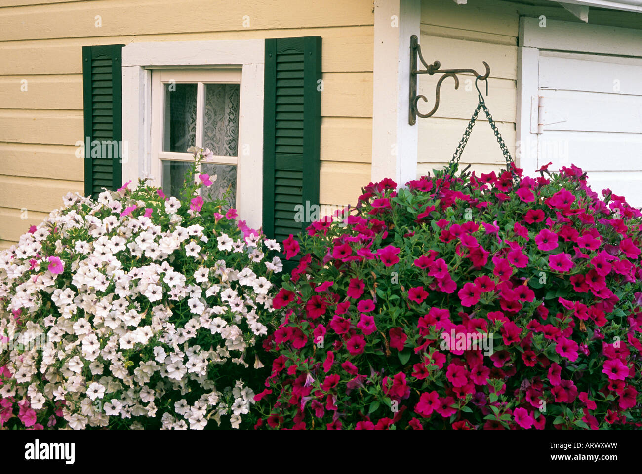 Garden Shed And Hanging Baskets Of Wave And Tidal Wave Petunias In