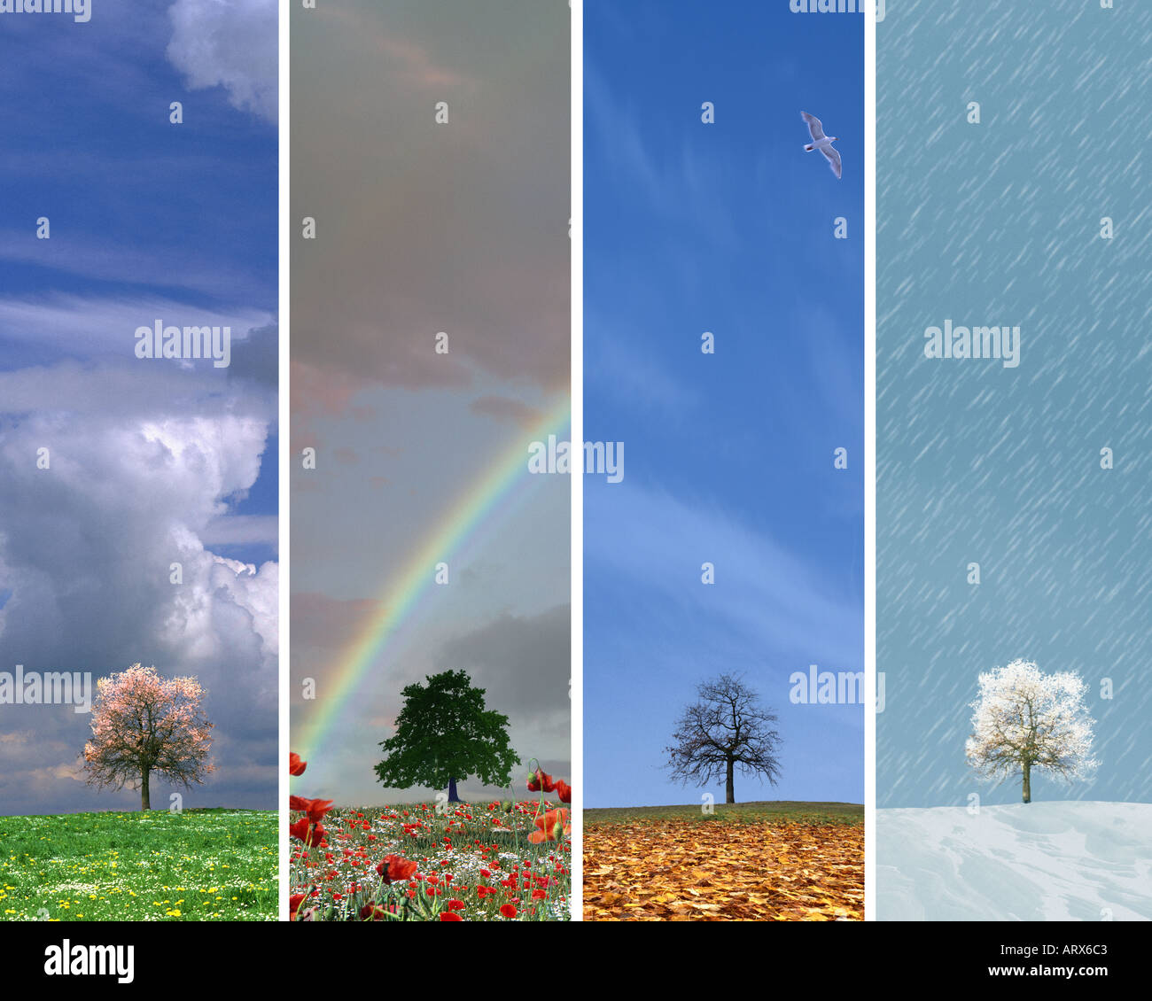 FOUR SEASONS: Combination of Spring Summer Fall and Winter - Stock Image