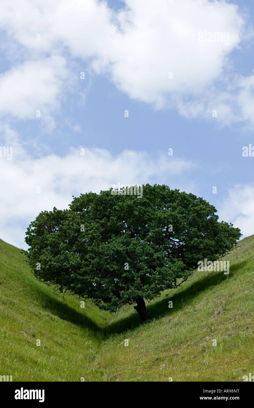 Lone tree leaves a check mark shadow on the notched hillside - Stock Image