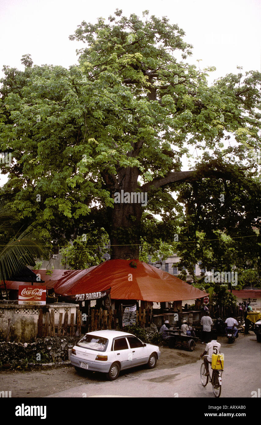 An outdoor market and café under a baobab tree Zanzibar Tanzania East Africa - Stock Image