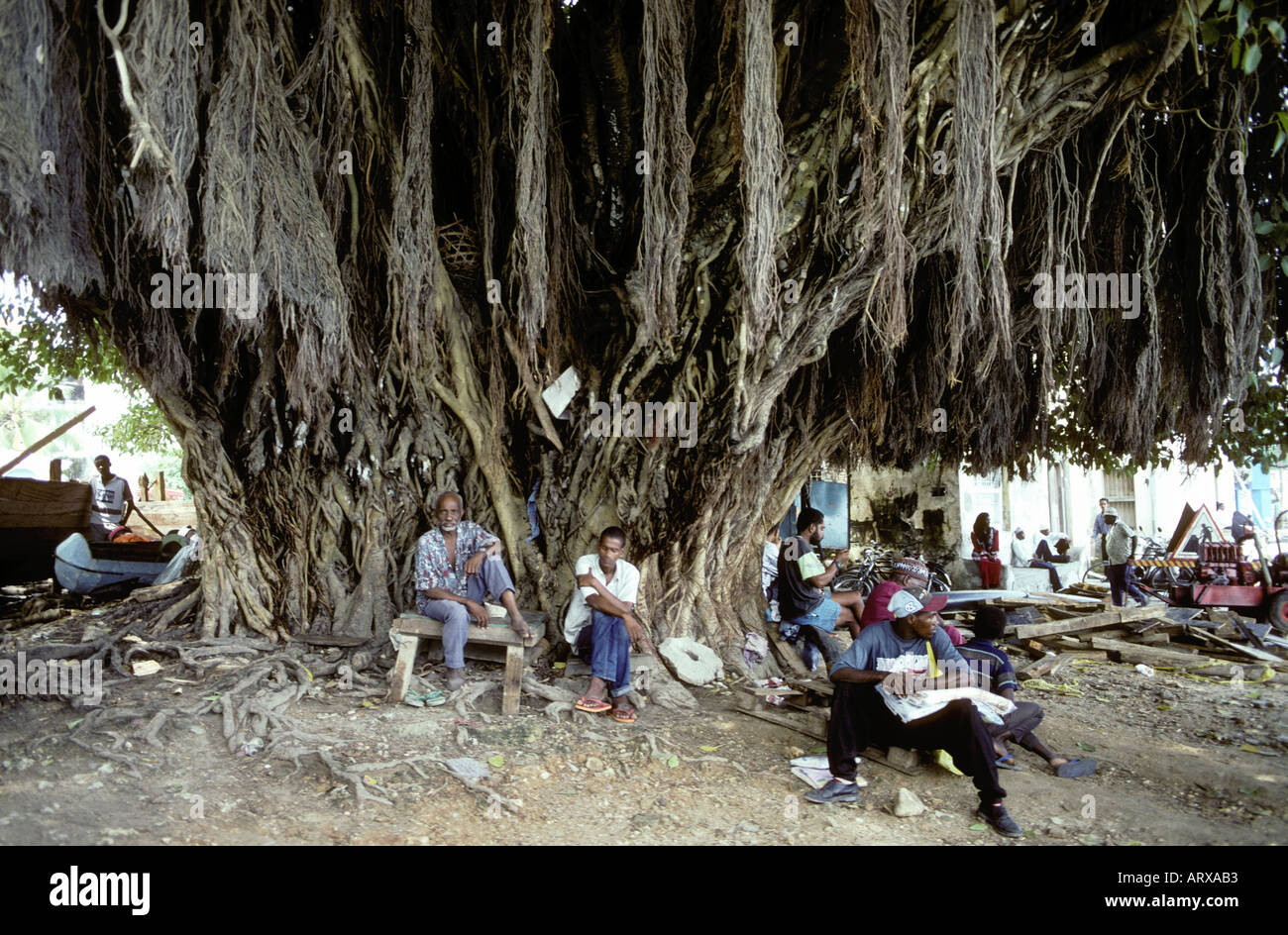 Local men and women resting under a huge fig tree Zanzibar Tanzania East Africa - Stock Image