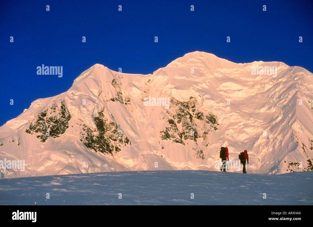 Mountaineering on the Grand Plateau Glacier with Mt Tasman in the background in Mt Cook National Park New Zealand - Stock Image