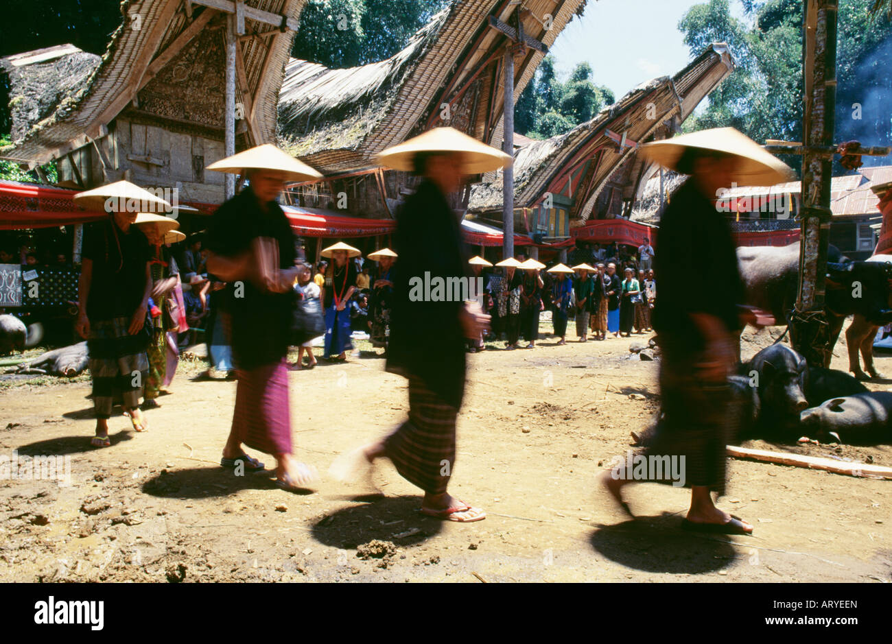 Funeral procession, torajaland - Stock Image
