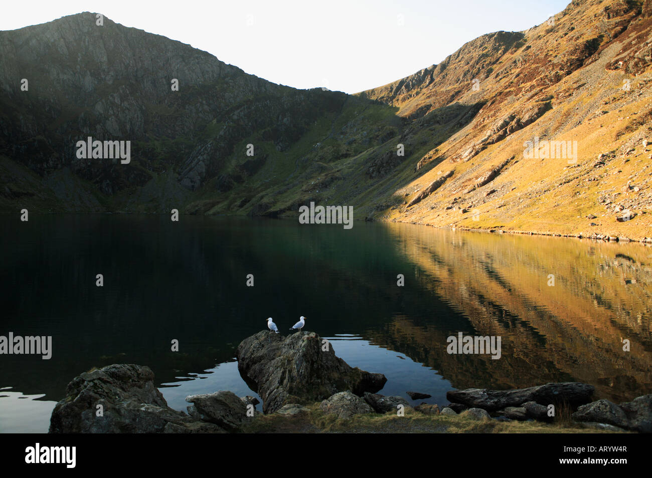 Wide view of Llyn Cau , a welsh mountain lake on Cadair Idris on a still day in winter in low sunshine with rich Stock Photo