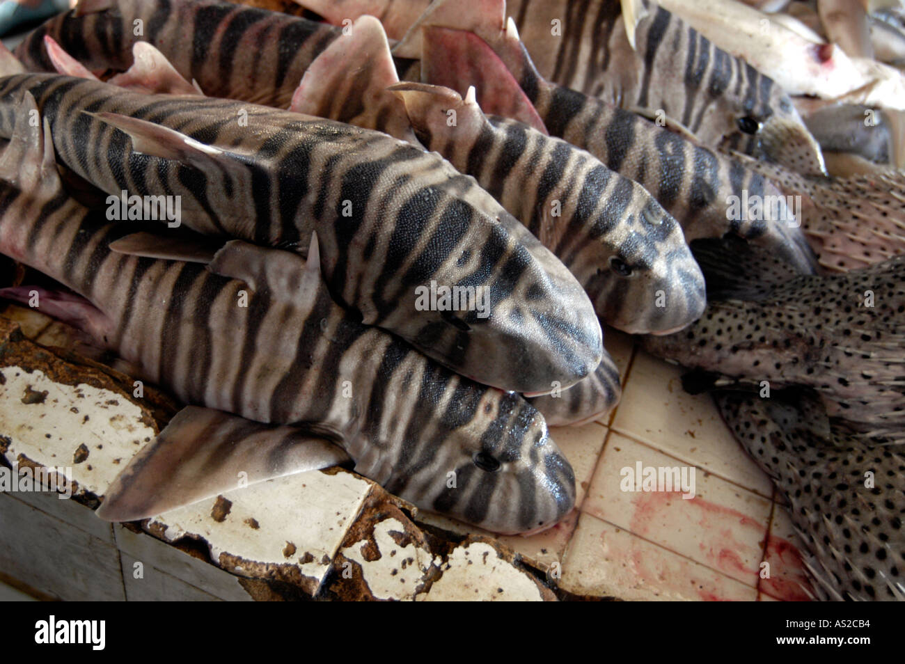 Zebra shark at fish market - Stock Image