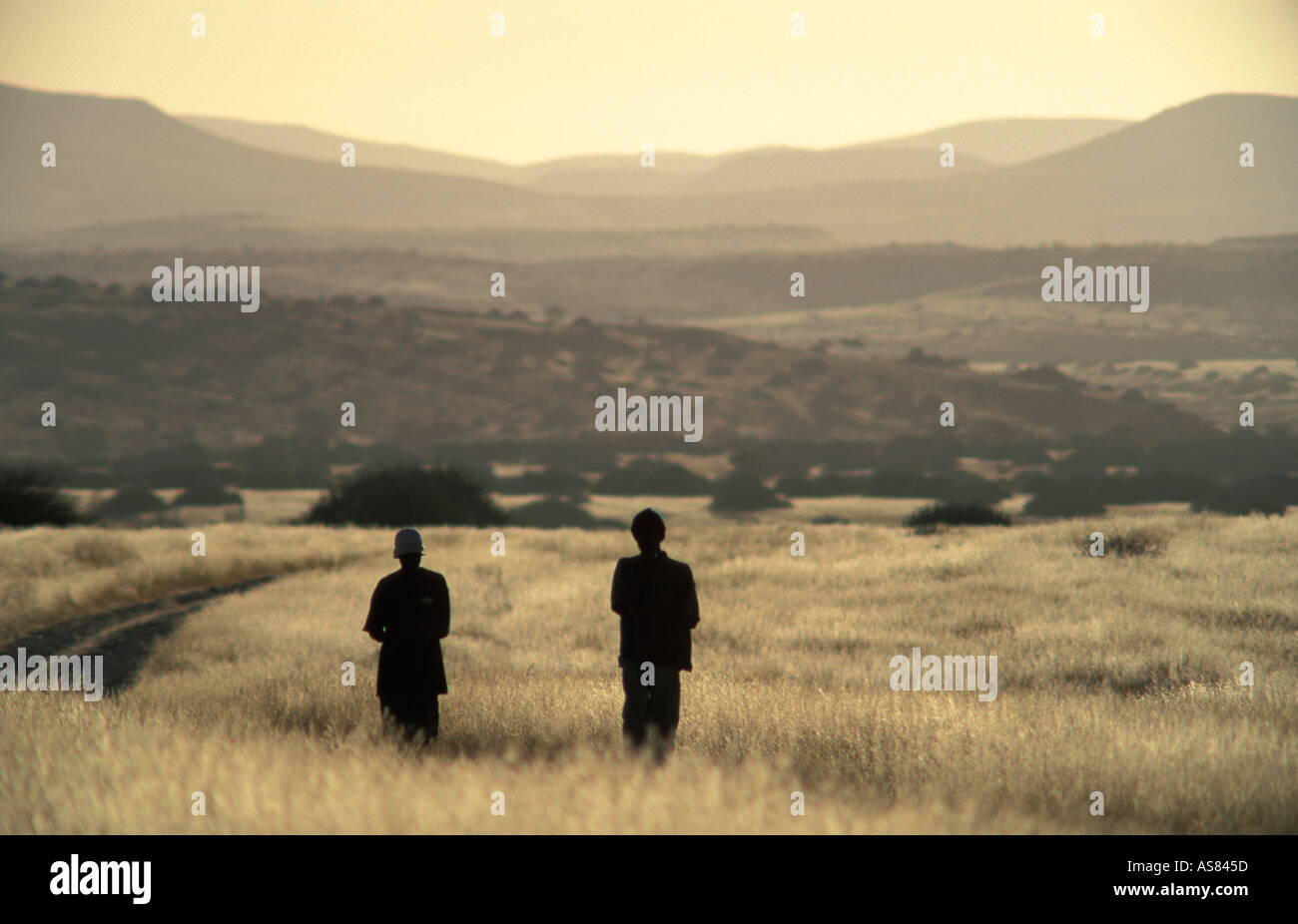 silhouettes at sunset Palamwag South of Opuwo on the Sesfontein road Namibia - Stock Image