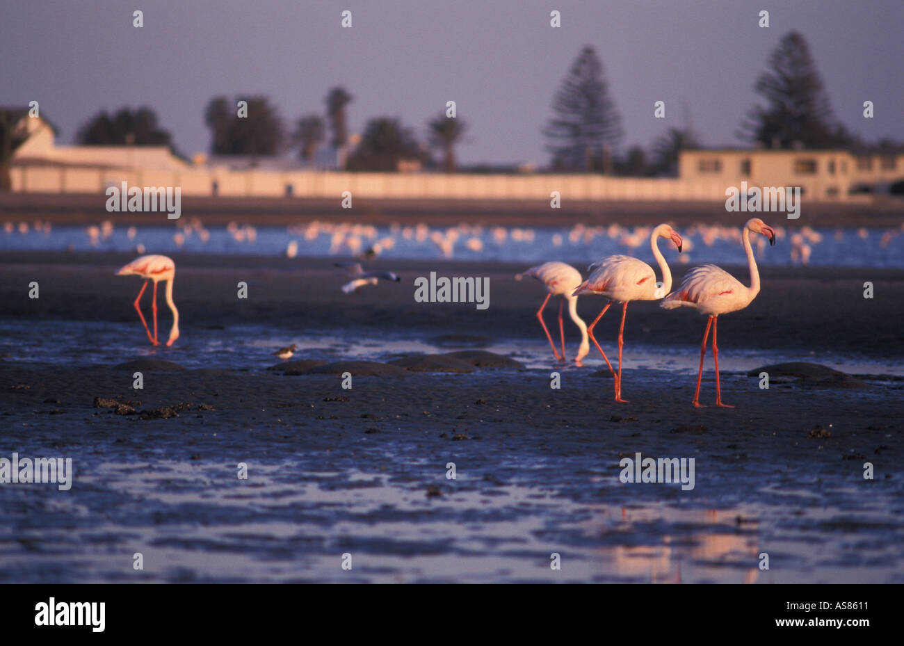 Walvis Bay main harbour town in Namibia The lagoon is Namibias most important wetland with flamingos and rare white pelicans - Stock Image