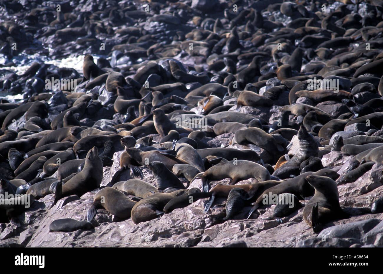 The site where European explorers first landed is now more famous for its Cape Fur Seals Cape Cross Namibia - Stock Image
