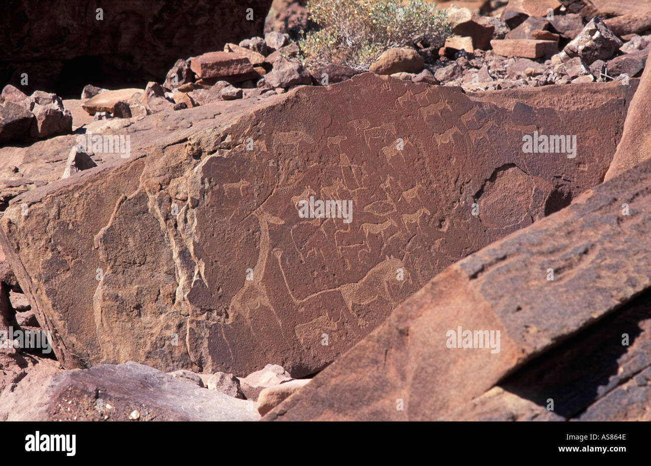 Ancient petroglyphs some dated as early as 3000 BC Twyfelfontein Including lions giraffes antelope zebra Namibia - Stock Image